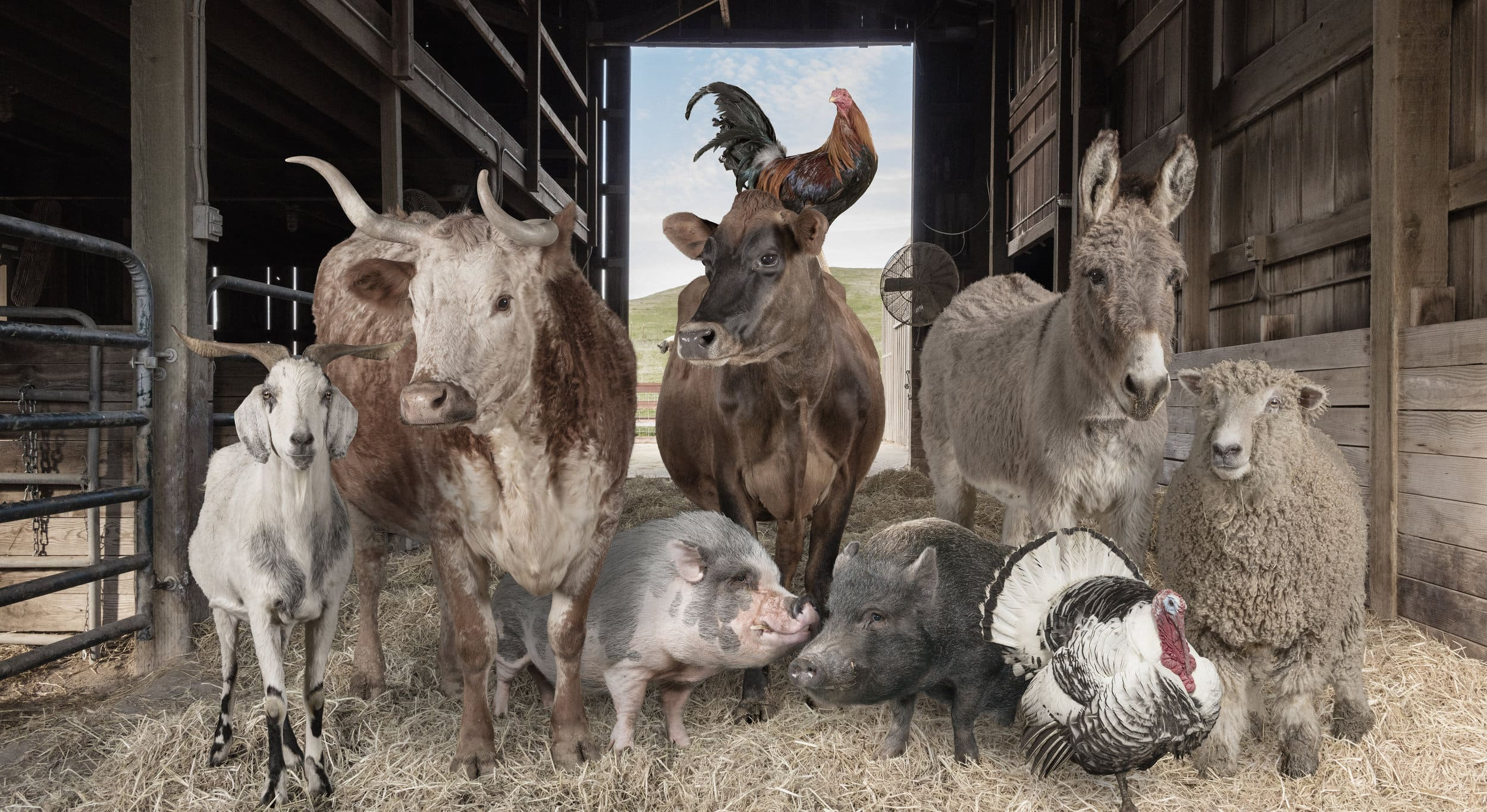 The Art of Artfully Having Animals Pose for Class Pictures: Rob Macinnis